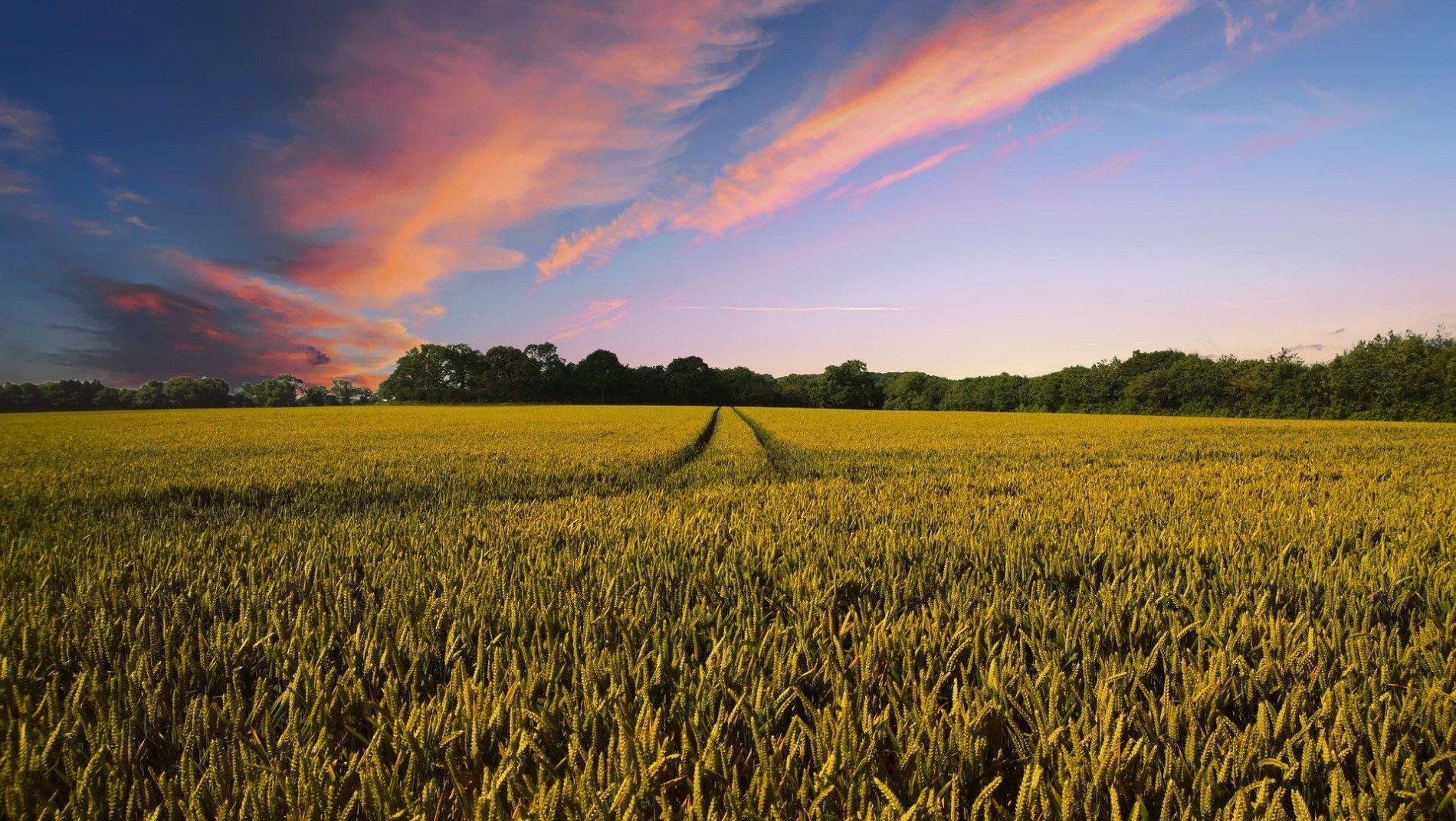 La Coordinación entre el sector agrario y las ETT
